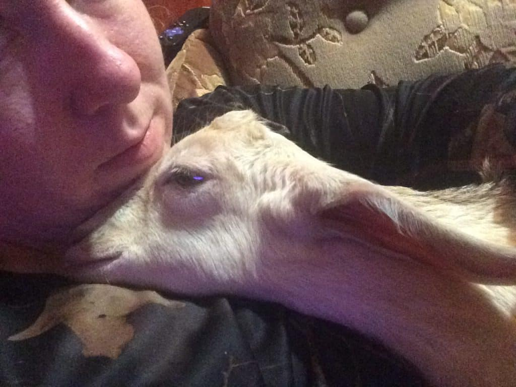 goat cuddling in house